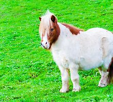 White chestnut pony horse in green grass field, copy space available by Stanciuc