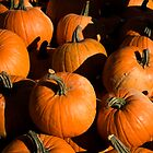 pumpkins by etccdb