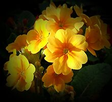 yellow primroses by cynthiab