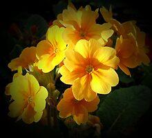 yellow primroses by cynthiab