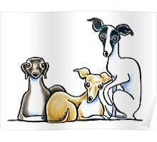Italian Greyhound Trio Poster