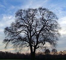 A  bare tree in Burlington County,New Jersey by windrider