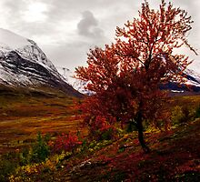 Intense Autumn by Gustav Nordlund