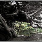 Cypress Skeleton by Wayne King