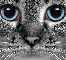 Blue Eyes by quin10