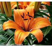 Tiger Lilly by Cateyes