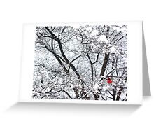 Birdie in a Tree (Central Park) Greeting Card