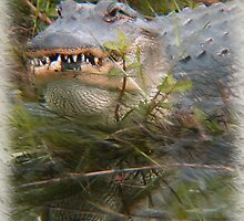 American Alligator by Kirk Allemand