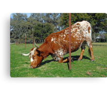 The Grass is Always Greener on the Other Side of the Fence Canvas Print