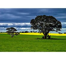 """""""Green & Gold"""" Photographic Print"""