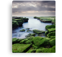 Green Weed Cove Canvas Print