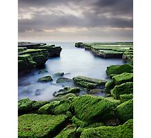 Green Weed Cove Photographic Print