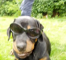 vague dog with sunglasses by daantjedubbledutch