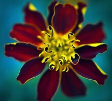 Red Flower by Mike Bartley
