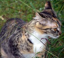 take time to sniff the....weeds? by tomcat2170