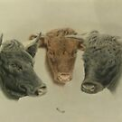 Three Dexter cows, Cilla, Constance and Bonnie by Karie-Ann Cooper