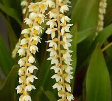 strings of white orchids  by yesdigiterarte