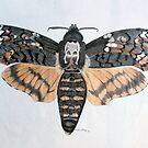 Deaths Head Hawkmoth by Penny Edwardes