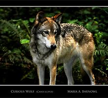 Curious Wolf - Cool Stuff by Maria A. Barnowl