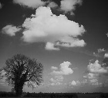 Monochrome Fen by Dave Pearson