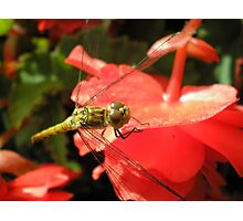 Buzz Off! Photographic Print