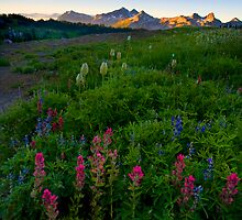 Tatoosh Dawn by DawsonImages