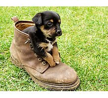 Too Small For Your Boots! Photographic Print