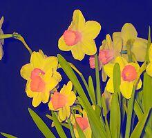 Daffodils by Pattiann Malynn