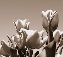 Tulips in Monotone by whoalse
