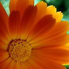 flower by janik