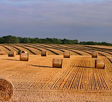 Lets make Hay by Chris Clark