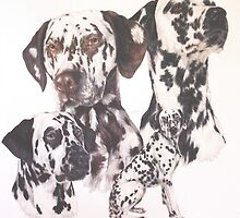 Dalmatian  by BarbBarcikKeith