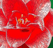 Red Camellia by dilstudio