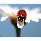 ladybird11 by Ellen van Deelen