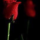 Romance by Kim Roper