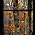Looking Out on Falls Beauty -2 by Carla Jensen