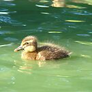 Cutest Little Baby Ducky Wucky by artistfemale
