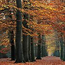 While the leaves kept falling by jchanders