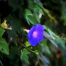 Painted Morning Glory by kalliope94041