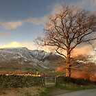 Blencathra and Tree by Jonnyfez
