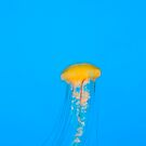 Jelly Fish 1 by Brad Hill