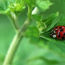 Ladybug Hideaway by Bonnie T.  Barry