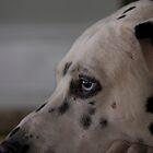 Lucky Dog 3 by DavidBerry