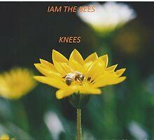 Bees Knees by raymondo56