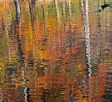 Afternoon Reflections by Terri~Lynn Bealle
