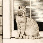 Cat In Window (pencil) by Deborah Duvall