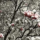 a splash of magnolia by Bente Hasler