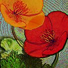 Californian Poppies B2 by ©   Elaine van Dyk