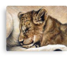 Lion cub on mum's tum Canvas Print