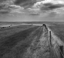 South Downs by Moth